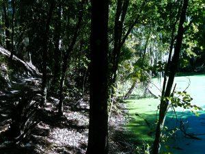 Alafia River State Park Mountain Bike Trails