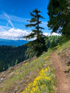Alpine Trails – Oakridge, OR