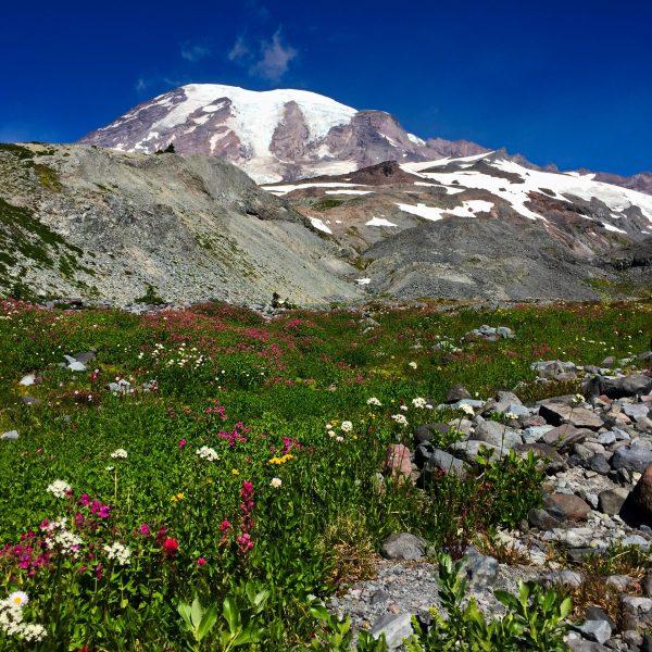 Mount Rainier Skyline Trail Loop & Paradise Glacier