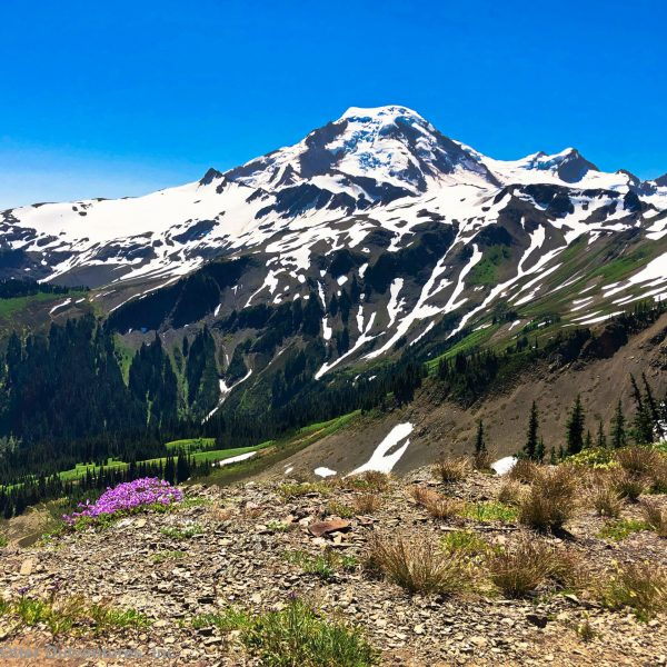 Skyline Divide Trail - Mount Baker Wilderness