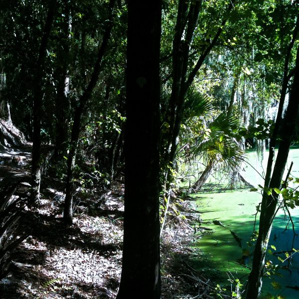 Alafia River State Park Mountain Bike Trails