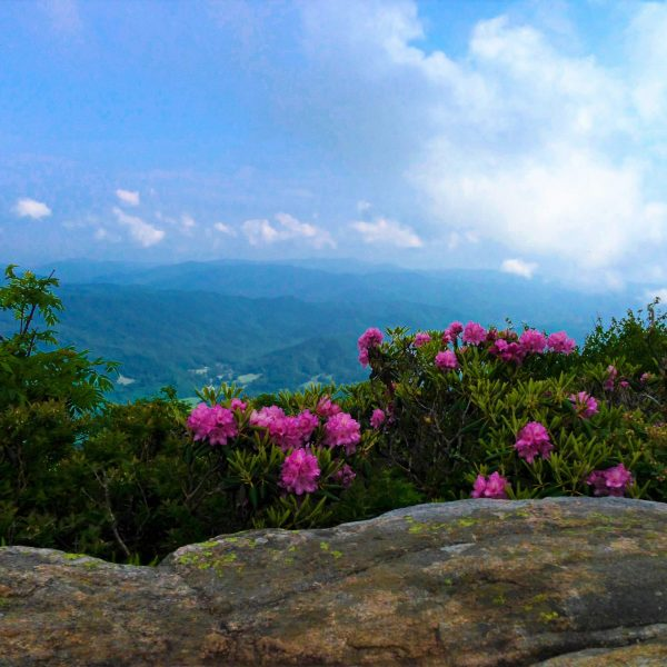 Roan Mountain, TN