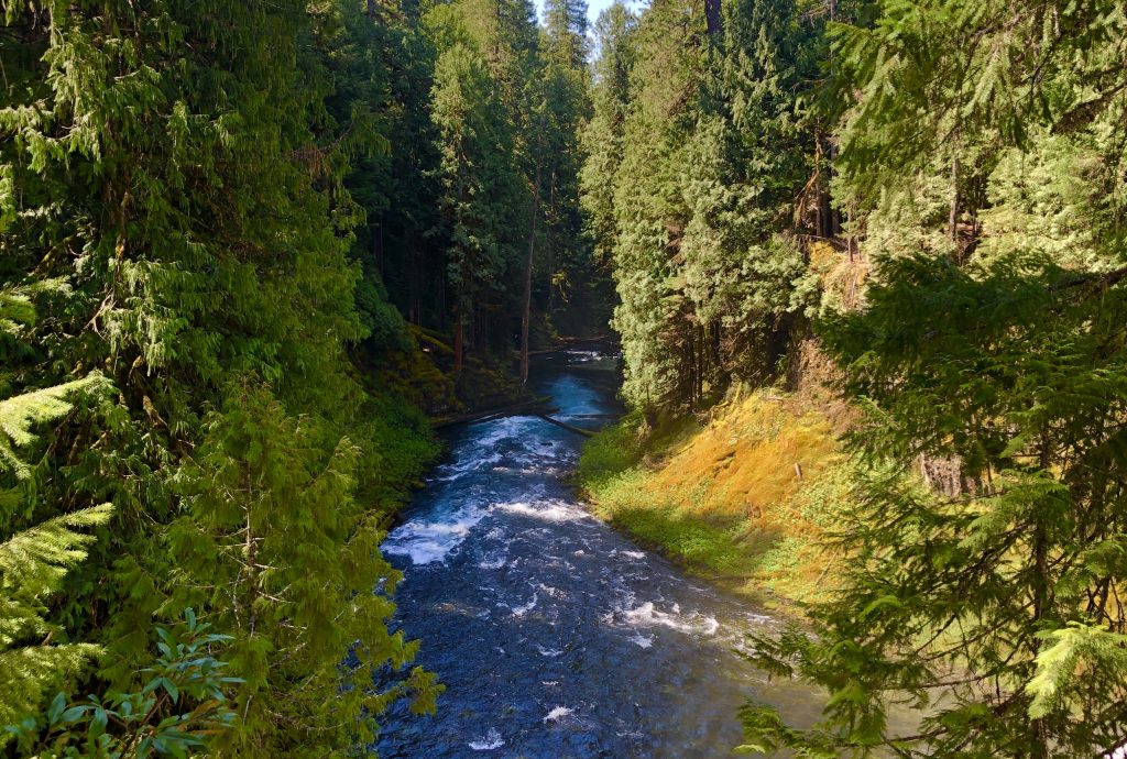 McKenzie River Trail, Oregon